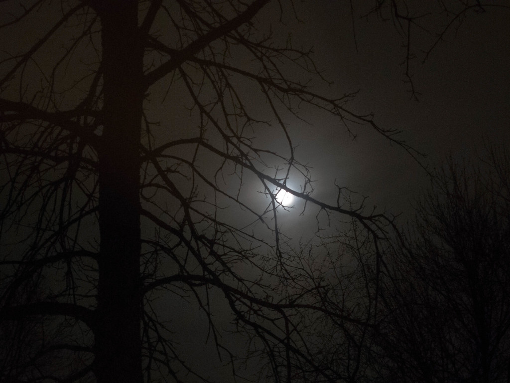 Moon through the oak tree