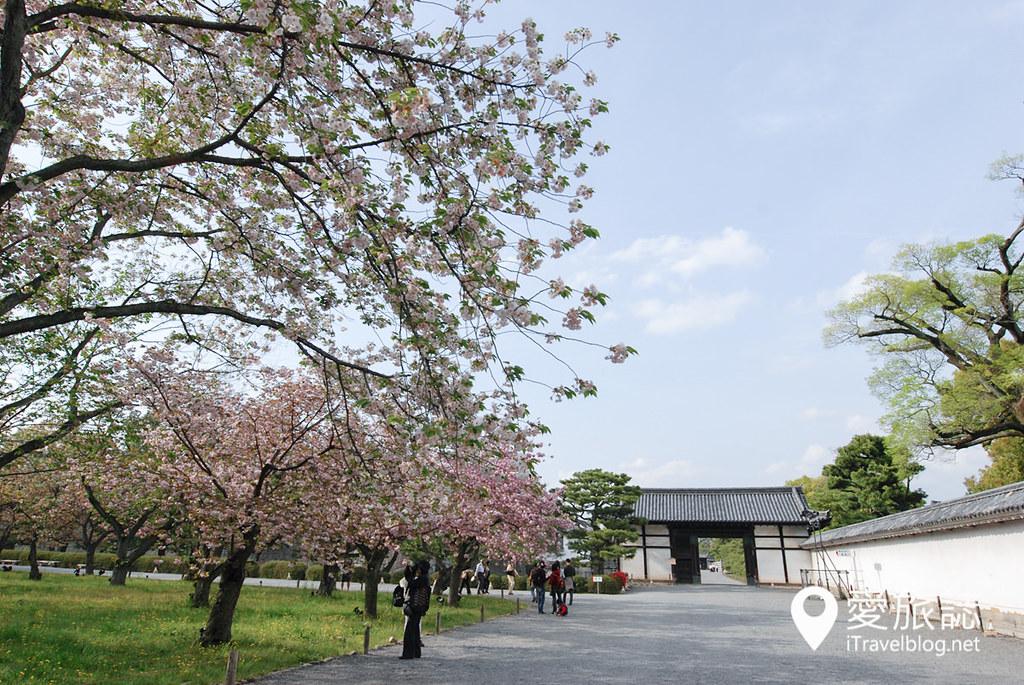 京都赏樱景点 元离宫二条城 20