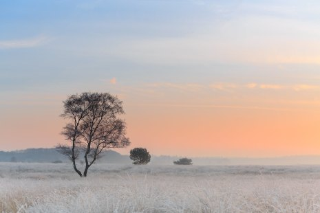 Dutch Ginkel prairie in winter mood