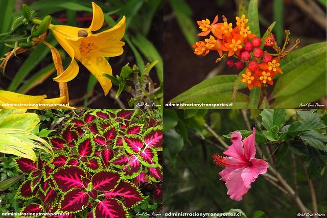 Collage 1 Jardín Botánico Tau Kiani