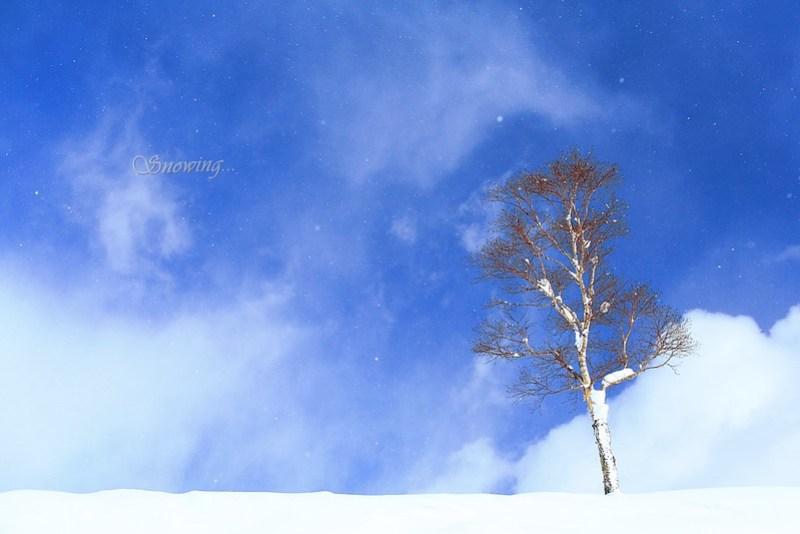 雪花‧雪淚(snowing)