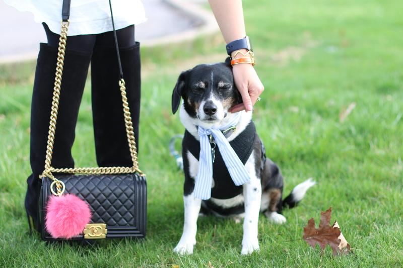 chanel boy bag, gold chain, pompom charm, beagle dog Louis
