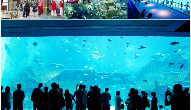 s.e.a-aquarium