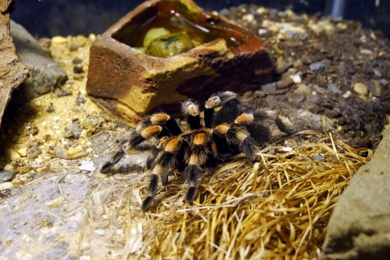 20130304 National Zoological Park, Washington DC 124