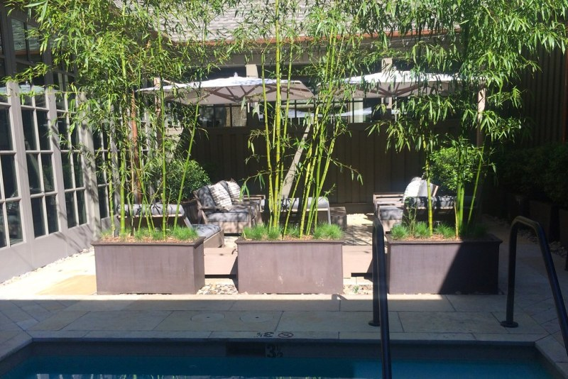 Relaxation garden and mineral pool