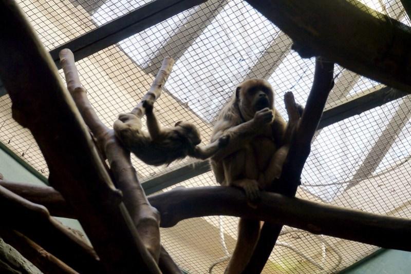 20130304 National Zoological Park, Washington DC 102