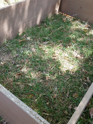 Gardening for renters
