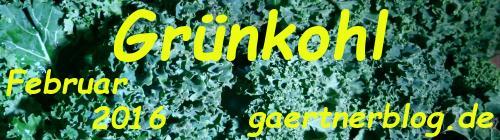 Garten-Koch-Event Februar: Grünkohl [29.02.2016]