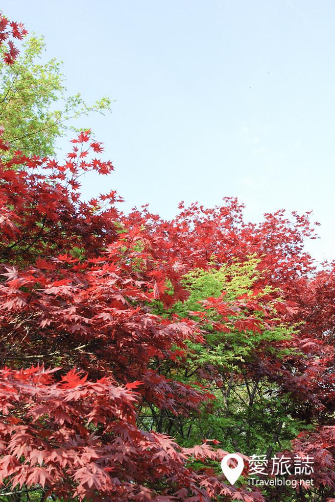 京都赏樱景点 元离宫二条城 31