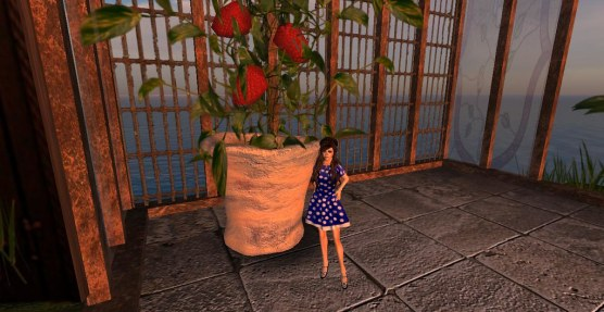 StrawberryLand4_001