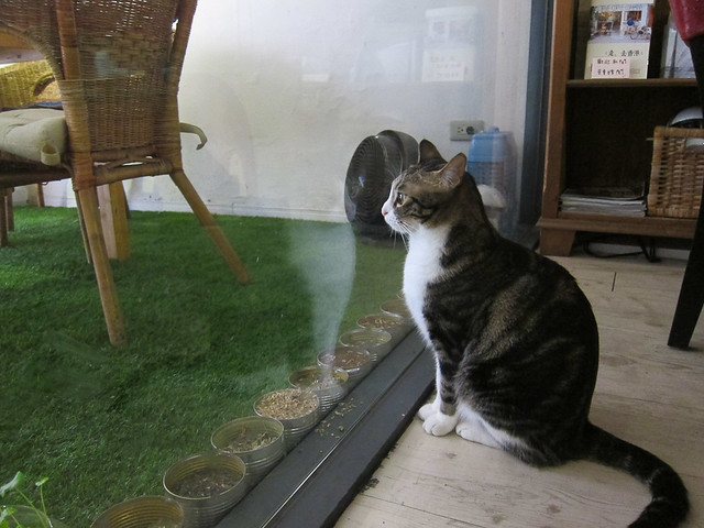 meow-bar-4