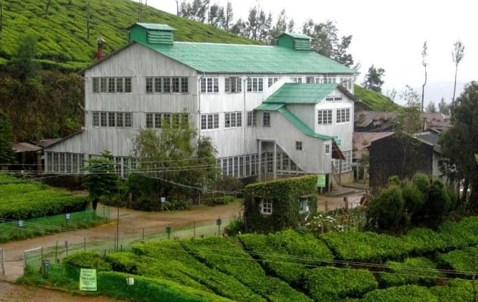 Tea Factory Visit - Munnar - Kerala