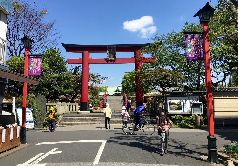 Wisteria at Kameido Tenjin