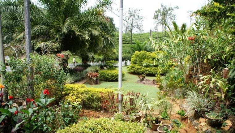 Zesta Tea Cup - Lawn Outside