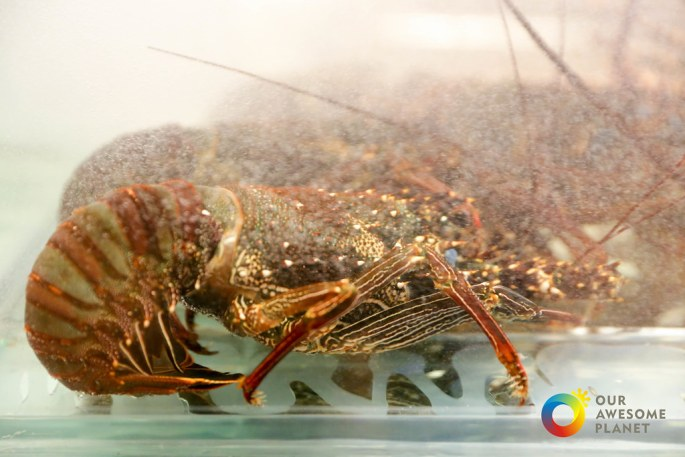 Mad For Lobsters-32.jpg