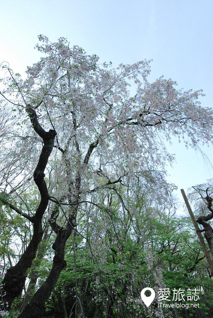 京都赏樱景点 元离宫二条城 24