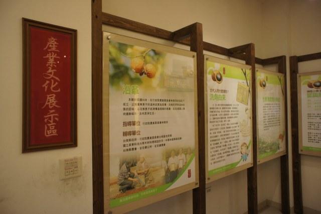 台南市安定區古寶無患子 (22)