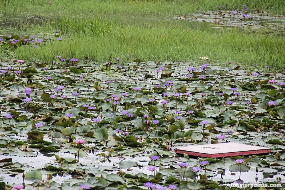 Koh Lipe | Satun, Thailand