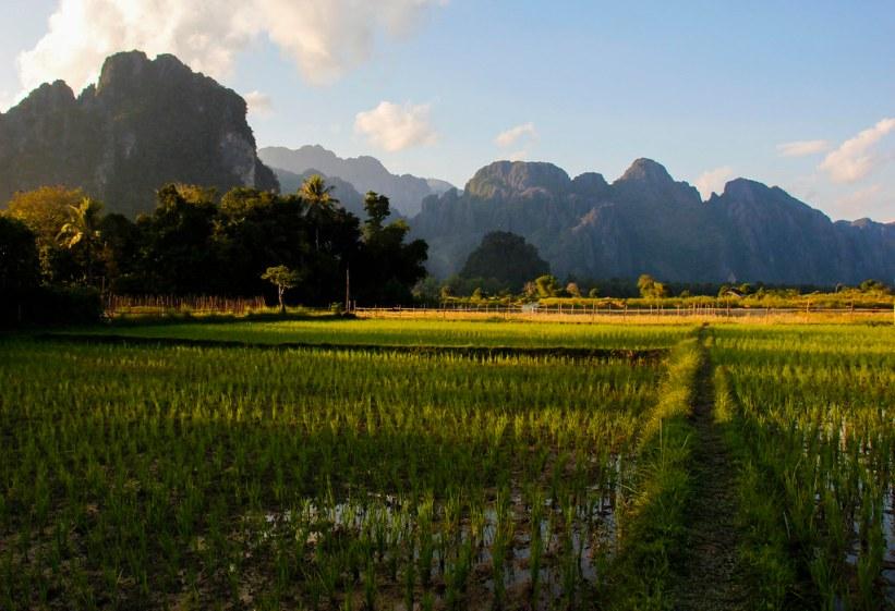 Rismarker i Vang Vieng