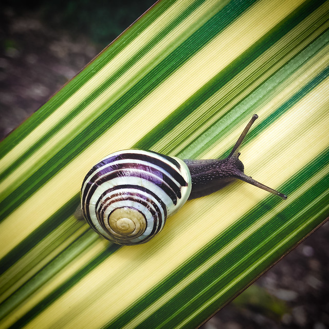Speed Stripes by Simon & His Camera