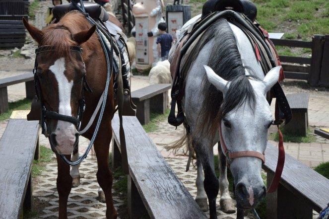 Cingjing, Qingjing Farm, horses, Taiwan