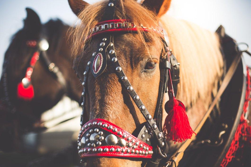 Imagen gratis de un bonito caballo