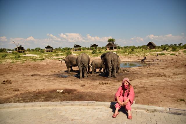 エレファントサンズロッジの象