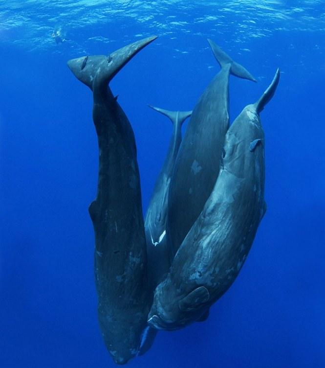 world-whale-day-photos-35__880