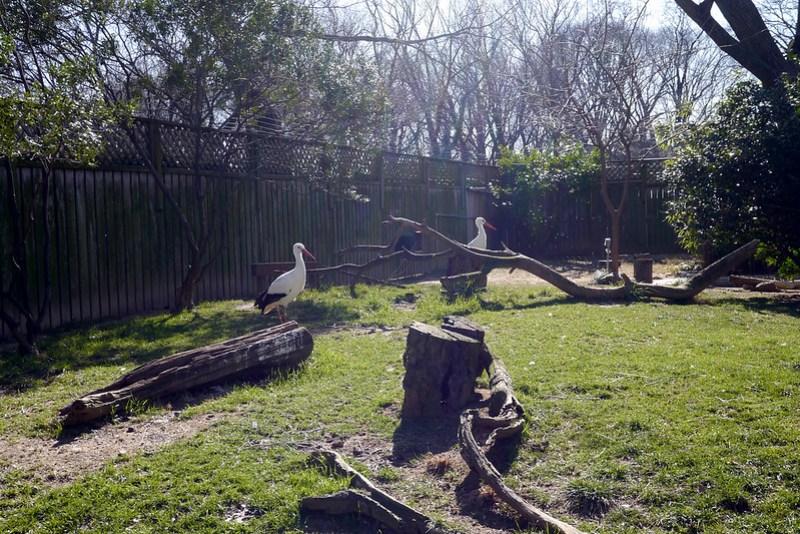 20130304 National Zoological Park, Washington DC 062