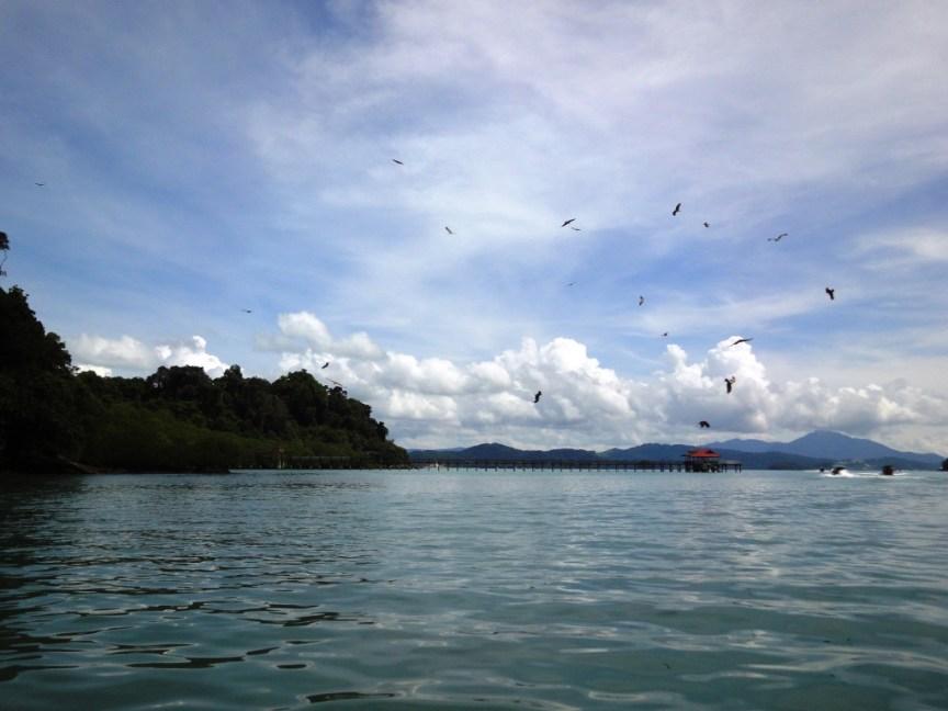 Eagle Ray Feeding near Langkawi