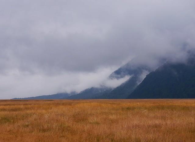 Fields under Mist