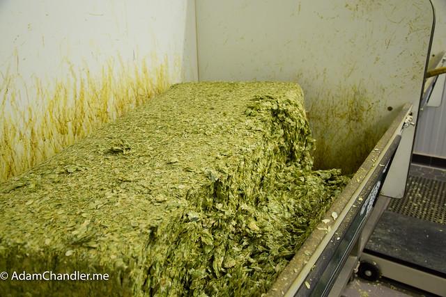 Sierra Nevada Brewing, NC