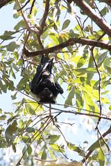 bats Timber Creek 2