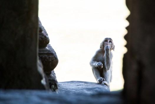 Angkor Vat Affe