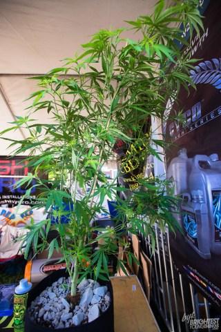 042316_Cannabis Festival_057