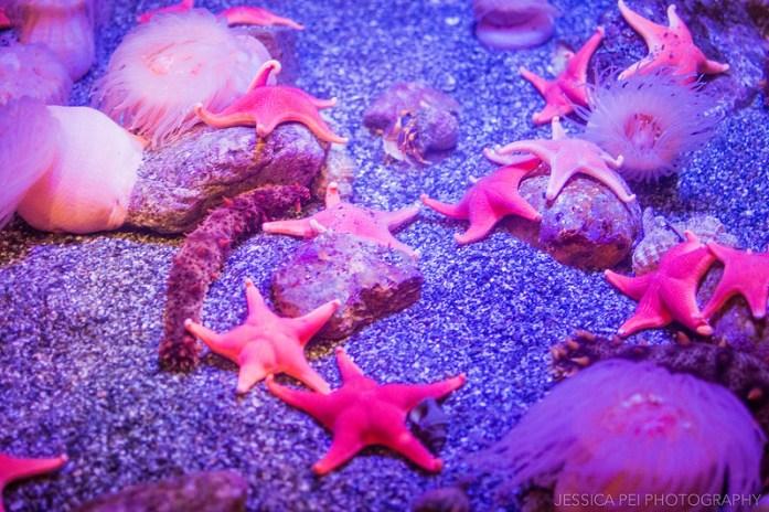 Aquarium of the Pacific Starfish
