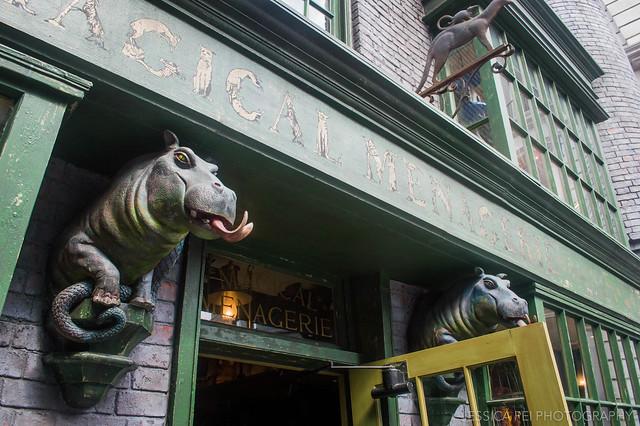 Magical Menagerie Shop