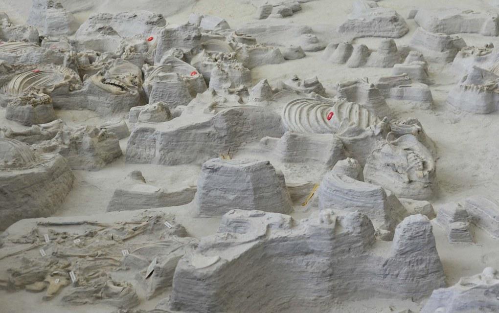 Ashfall fossil beds 5