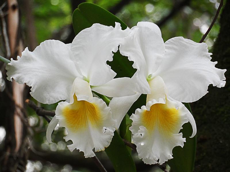 Orquídeas cultivadas en la Universidad EAFIT. Abril 6 de 2016