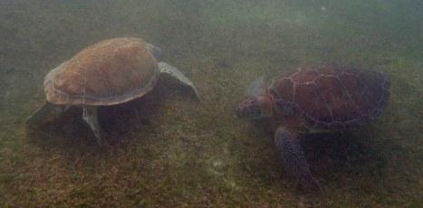 Turtle Bay, Akumal, Mexico
