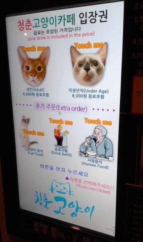 Cat Cafe Touchscreen