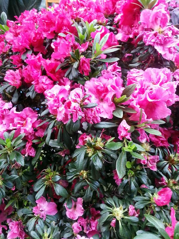 20130307_155822 United States Botanical Garden Conservatory
