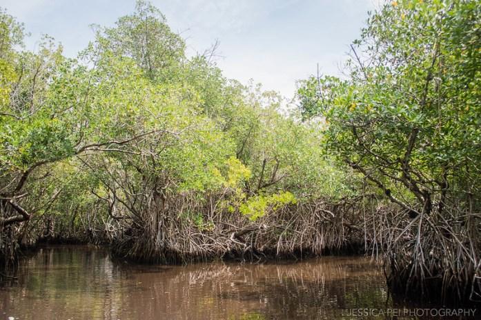 Florida Everglades Airboat Mangrove Tour