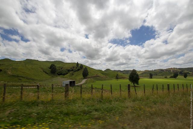 NZ_12-26