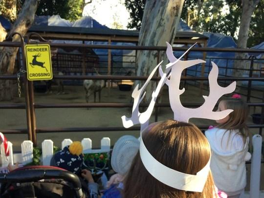 meeting the reindeer