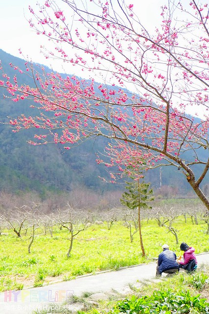 合歡山&武陵農場 (28)