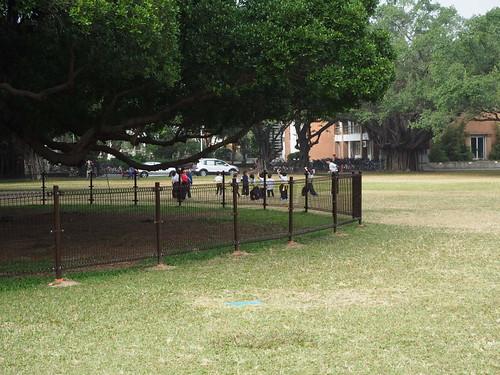 成功大学ガジュマルの木の下でカンフーする子どもたち