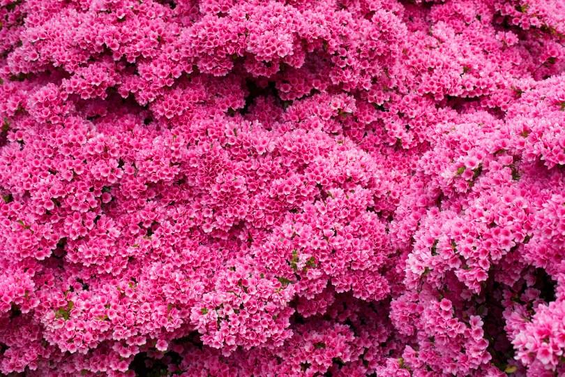 wilmington-brandywine-historical-cemetary-pink-flower-bush