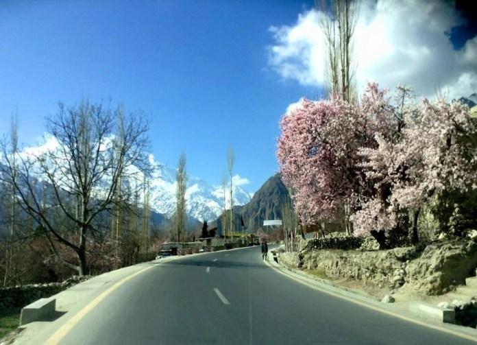 Spring Blossom on KKH Hunza