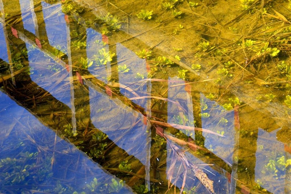 11 Reflejo en el estanque dorado